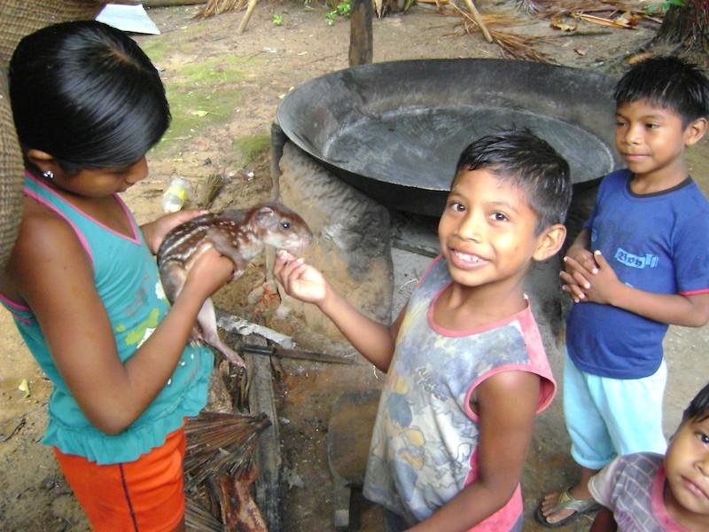 Crianças brincando com filhote de paca capturada durante uma caçada. Comunidade São Gabriel (Pohsaya Pit) no médio Papuri. Foto: Aline Scolfaro, 2010.