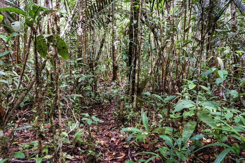 Paisagem de caatinga. Caminho para um local de caça próximo ao igarapé Inebo. Foto: Karolin Obert, 2017.