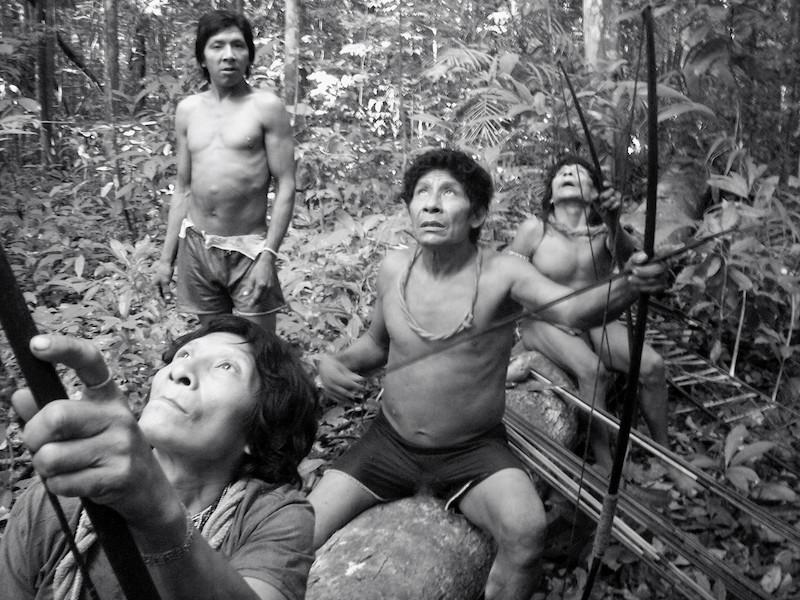 Enquanto Uriximatỹa olha para a câmera, Kamará, Takya e Pirama'a observam a copa de uma árvore a procura de macacos, aldeia Juriti, TI Awa, 2007. Foto: Uirá Garcia