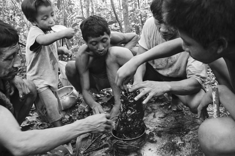 Da esquerda para direita: Takamỹa à, seguido por seu filho, Majhuxa'a, Hajkaramykỹa e seu filho Warajua, comendo mel durante caminhada na floresta. Aldeia Awa, TI Caru, 2013. Foto: Uirá Garcia