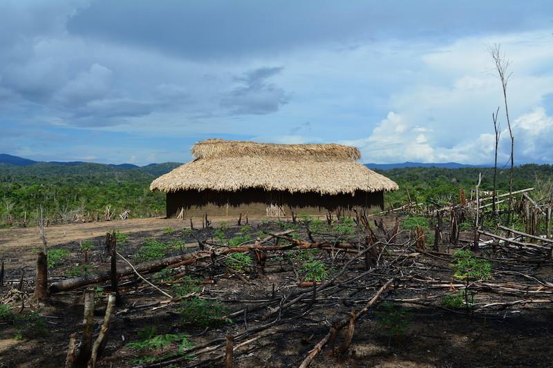 Casa no estilo ''koneedo ju'jä''. Comunidade Fuduuwaadunnha. TI Yanomami, Roraima. Majoí Gongora, 2019.