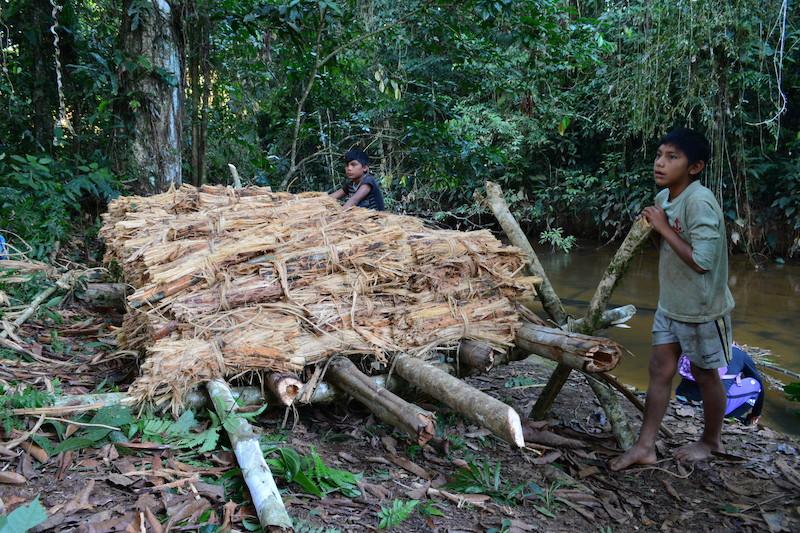 Timbó ''ayaadi'' reservado antes de ser batido. Fuduuwaadunnha. TI Yanomami, Roraima. Majoí Gongora, 2018.