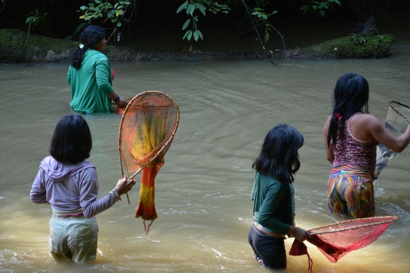 Pescaria coletiva com timbó. Fuduuwaadunnha. TI Yanomami, Roraima. Majoí Gongora, 2018.