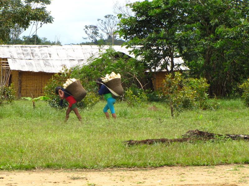 Mulheres carregam dezenas de quilos em seus cestos wowa. Fuduuwaadunnha. TI Yanomami, Roraima. Majoí Gongora, 2013.