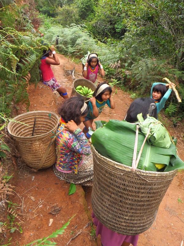 Avó e suas netas retornando da roça, cada uma com seu cesto wöwa. Fuduuwaadunnha. TI Yanomami, Roraima. Majoí Gongora, 2017.