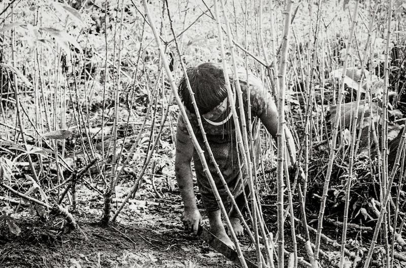 Mulher na roça. Fuduuwaadunnha. TI Yanomami, Roraima. Ana Gita de Oliveira, 1974.